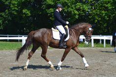 our beautiful Fabrice :) Horses, Animals, Beautiful, Animales, Animaux, Animal, Animais, Horse