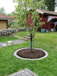 Här under Biggaråträdet ska det bli en rabatt:) Vi märker ut Front Yard Landscaping Design, Outdoor Gardens, Small Garden Landscape, Landscaping Around Trees, Backyard Landscaping Designs, Garden Layout, Rock Garden Landscaping, Walkway Landscaping, Backyard