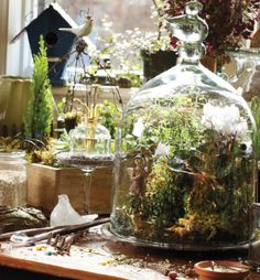 Creating a Terrarium is a good choice for busy indoor gardeners. These miniature landscapes housed under a glass cloche or jar only require watering every few weeks. #plant #tips