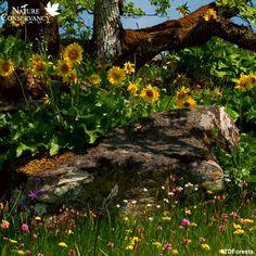 Not So Hollow Farm - Perennials for Pollinators Native Plants of Ontario Canada - Ontario Native Plant Nursery Small Natural Garden Ideas, Forest Conservation, Herbaceous Perennials, Plant Nursery, Native Plants, Shrubs, Habitats, Ontario, Nativity