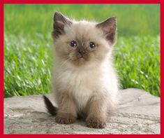 #MakeTodayBetter    Munchkin cats - the cutest things!  I enjoy spending time each day with my own little munchkin kitty!