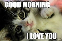We have collected some really cool and funny good morning memes, inspirational and motivational good morning quotes and funny good morning messages. Funny Good Morning Messages, Funny Good Morning Memes, Good Morning Texts, Morning Humor, Funny Messages, Morning Cat, Morning Coffee, Love Memes For Him, Love You Meme