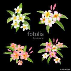 """Tropical Flowers and Leaves Set. Exotic Plumeria Flower. Vector Flowers tarafından oluşturulmuş """"wooster"""" Telifsiz vektörü en uygun fiyatta Fotolia.com 'dan indirin. Pazarlama projelerinize mükemmel stok vektörü bulmak için, en ucuz online görsel bankasına göz atın!"""