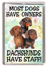 """Dachshund Smooth Haired Dog Fridge Magnet """"Most Dogs.... Dachshunds Have Staff"""""""