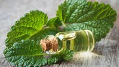 Cold Sore Relief, Home Remedies For Herpes, Essential Oils For Colds, Oregano Oil, Lemon Benefits, Thyroid Health, Alkaline Diet, Lemon Balm, Organic Beauty
