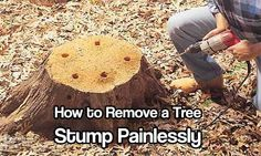 How to Remove a Tree Stump Painlessly. There are a few option available but the one I am sharing with you today worked really well and cost less than $20