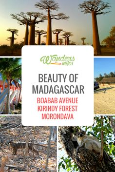 Our Madagascar adventure took us via Belo to Morondava where we experienced the wondrous Boabab Avenue and Kirindy Forest. Travel Articles, Travel Advice, Travel Guides, Travel Tips, Africa Destinations, Amazing Destinations, Travel Destinations, Star Mobile, Madagascar Travel