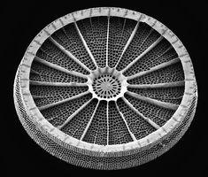 Scanning Electron Micrographs of Diatoms Title: John von...