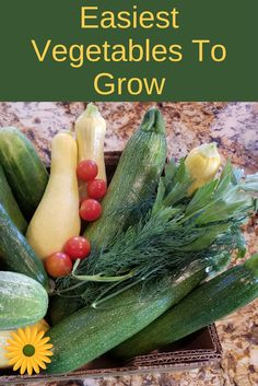 If you're looking for some easy to grow vegetables, here are a few that will pleasantly surprise you every time!