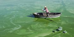 A worker rows a boat in Chaohu Lake, filled with blue-green algae, in Hefei, Anhui province in China (© Reuters/Stringer) Global Warming Climate Change, Water Pollution, Love Rain, Picture Day, World Pictures, Vintage London, Air France, Vintage Posters, The Row