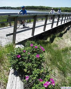Bike the Nauset bike trail at salt Pond Visitors Center in Eastham, Cape Cod.