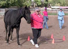 Horses Helping People-Push to learn more about Equine Assisted Psychotherapy