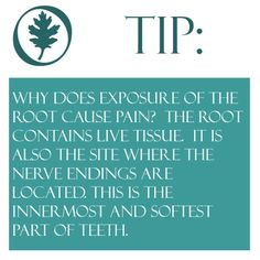 Restorative Dentistry helpful info: Why does exposure of the root cause pain?  The root contains live tissue.  It is also the site where the nerve endings are located. This is the innermost and softest part of teeth