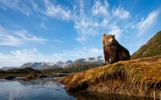 7 Tips for Taking Great Animal Photos on Your Next Trip | Travel + Leisure