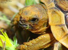 Hungry turtle by Ibrahim  Abu Mazna on 500px