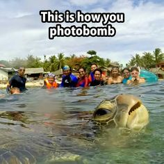Didn't sea you there, turtle. A green sea turtle photobombed Diovani de Jesus' group picture while he was on vacation on Apo Island, in the Philipp. Funny Animal Pictures, Funny Photos, Funny Animals, Cute Animals, Awkward Animals, Pet Pictures, Pet Photos, Random Pictures, Funny Cute