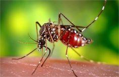 Diferencia entre el dengue y el chikungunya; Síntomas de ambos virus