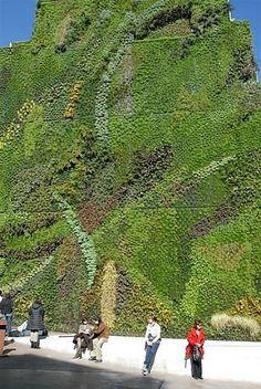 Giardini che si aggrappano alle pareti