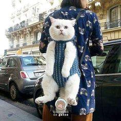 Não é amoroso?? - Segue o nosso universo felino - #universodegatos http://ift.tt/2buTHlO
