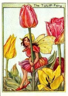 Tulip Flower Fairy Vintage Print by Cicely Mary Barker, first published in London by Blackie, 1944 in Flower Fairies of the Garden.