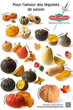 Poster des courges Prince de Bretagne Types Of Pumpkins, Smoothie Diet Plans, Courge Spaghetti, List Of Vegetables, Food Wallpaper, Food Charts, Brunch, Plant Based Eating, Acorn Squash