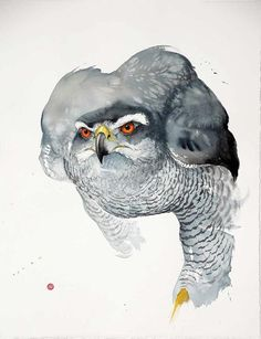 Karl Martens Goshawk (Unframed) Signed Watercolour on Arches Watercolour paper 35 1/2 x 39 1/2 in 90.2 x 100.3 cms (KaM155)