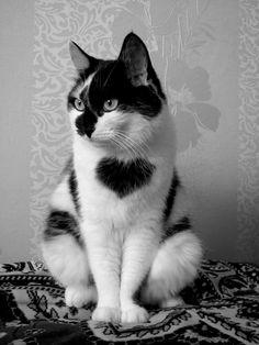Un chat pour la St Valentin ??? Non mais il est tellement cute.. Pas croyable!,