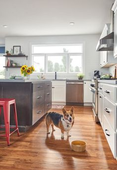 White Kitchen Cabinets   Wolf Classic Cabinets In Somerset Style And White  Paint Classic Kitchen Cabinets