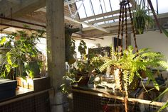 Hanging Ferns Hanging Ferns, Plants, House, Home, Plant, Homes, Planets, Houses