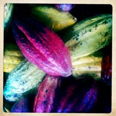 Who knew chocolate could start as such colorful cocoa pods? #cocoa pods cure all, cocoa pods are love.