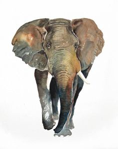 ELEPHANT Original watercolor painting 11X14inch by dimdi on Etsy