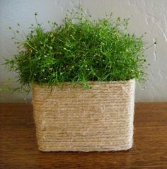 milk carton planter