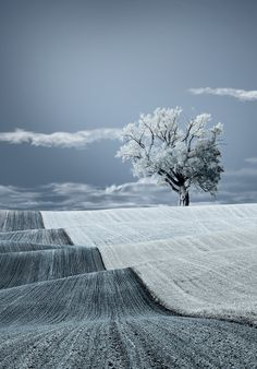Warm Blanket of Nature Cool mint effect and mind boggling colours. Beautiful tree in its simplicity Infrared Photography, Landscape Photography, Nature Photography, Stunning Photography, Snow Scenes, Winter Scenes, Beautiful World, Beautiful Places, House Beautiful