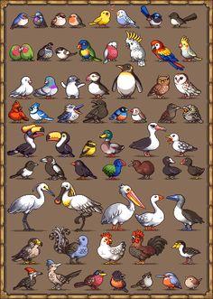 Birds   Paul Robertson