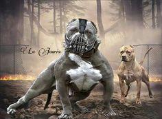 Bully Bane