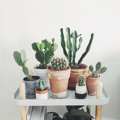 30 Best Creative Cactus Decorations to Beautify Your Home – Homely Cactus is a type of plant that is able to live in hot, dry and lacking water conditions. The original cactus h Decoration Cactus, Decoration Plante, Cacti And Succulents, Planting Succulents, Planting Flowers, Succulent Planters, Hanging Planters, Succulents Garden, Deco Cactus