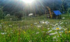 My cabin in the summer. At the southern part of Baiului mountains, Carpathians, Romania.
