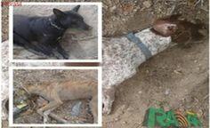Moradores de Delmiro Gouveia denunciam envenenamento de cães