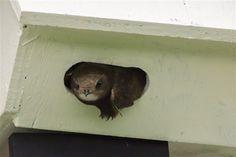 wk1 Garden Animals, Wildlife Nature, Birdhouse, Conservation, Swift, Nest, Wilderness, Nest Box, Nesting Boxes
