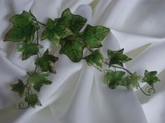 ivy | Variegated_Ivy - beautiful ivy tendrils mixed in to bouquets