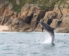 Dolphin watching, Penzance, Cornwall