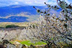cerezos-en-flor-Valle-del-Jerte