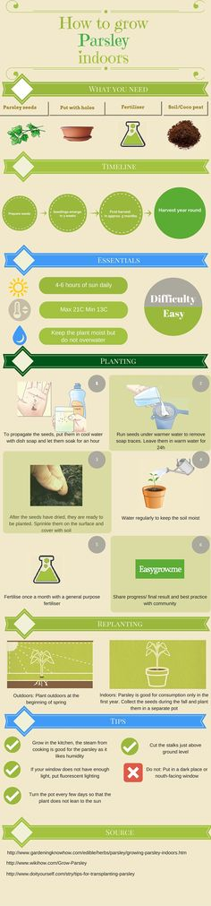 Quick and easy steps to #grow #Parsley at #home. #Indoor #gardening. find out more @ www.easygrow.me
