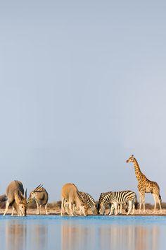 vurtual:  Etosha National Park (by frans lanting)