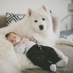 If These 302 Samoyed Photos Don't Make You Smile, Nothing Will Cute Baby Dogs, Cute Cats And Dogs, Cute Dogs And Puppies, Doggies, Cute Little Animals, Baby Animals, Beautiful Dogs, Animals Beautiful, Funny Cute Cats
