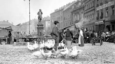 Geese are walking through the city center.  Bayreuth, Germany 1904