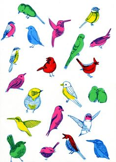 Eva Mouton - bird illustration