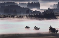 A morning fog glows above the Alpine foothills near Bernbeuren, Germany, June (Photo by Karl-Josef Hildenbrand/EPA)… Fotojournalismus, Modern Quotes, Feel Good Friday, Niagara Falls, Mists, Germany, Around The Worlds, Pictures, Image