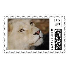 A gentle lion postage stamp