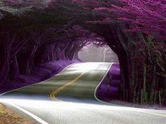 bluepueblo:    Tree Tunnel, Portugal  photo via decietor